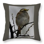 White Throated Sparrow Throw Pillow