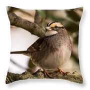 White Throated Sparrow On Branch New Jersey Throw Pillow