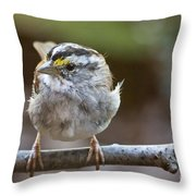 White Throated Sparrow Portrait Throw Pillow