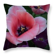 White Tip Pink Tulip Throw Pillow