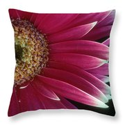 White Tipped Gerber Throw Pillow