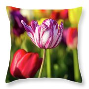White Tulip Flower With Pink Stripes Throw Pillow