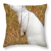 White Wabbit Throw Pillow