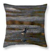 White Wagtail 4 Throw Pillow
