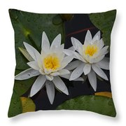 White Water Lilies Throw Pillow