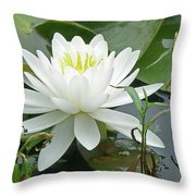White Water Lily Wildflower - Nymphaeaceae Throw Pillow