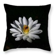 White Waterlily Throw Pillow by April Wietrecki Green