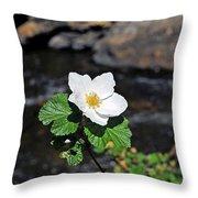 White Wild Rose In Big Thompson Canyon Throw Pillow