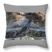 White Winged Dove Throw Pillow
