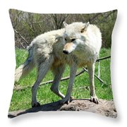 White Wolf 3 Throw Pillow