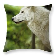White Wolf Stare Throw Pillow