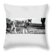 White Wolf Z Throw Pillow