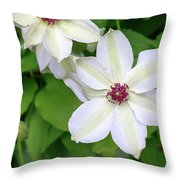 White, Yellow, And Purple Clematis Blossom Throw Pillow