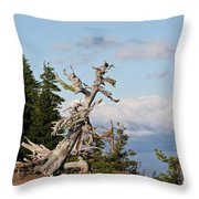 Whitebark Pine At Crater Lake's Rim - Oregon Throw Pillow