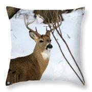 Whitetail Buck Profile Throw Pillow