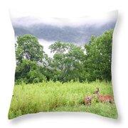 Whitetail Deer 1 Throw Pillow