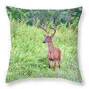 Whitetail Deer 4 Throw Pillow