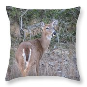 Whitetail Deer II Throw Pillow
