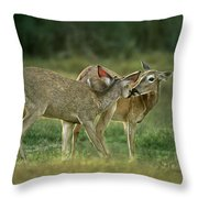 Whitetail Deer Share An Initmate Moment Texas Wildlife Throw Pillow