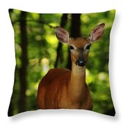 Whitetail Doe Throw Pillow