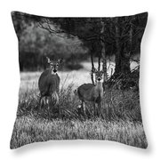 Whitetailed Deers Throw Pillow