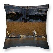 Whooper Swan Nr 12  Throw Pillow