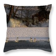 Whooper Swan Nr 14 Throw Pillow