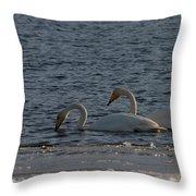Whooper Swan Nr 2 Throw Pillow