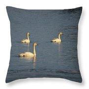Whooper Swan Nr 8 Throw Pillow
