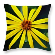 Whorled Rosinweed Throw Pillow