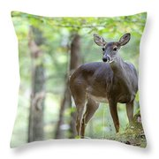 Who's Looking At Who Throw Pillow