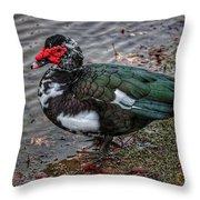 Wierd Muscovy Duck Throw Pillow