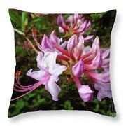 Wild And Native Pink Azalea Throw Pillow