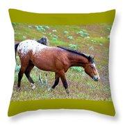 Wild Appaloosa Stallion Throw Pillow