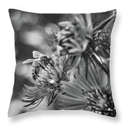 Wild Aster And Honey Bee Bw Throw Pillow