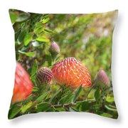 Wild Beautiful Telopea Flower In Sunset Light  Throw Pillow