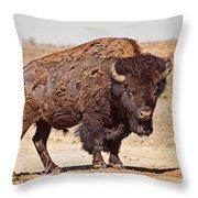 Wild Bison Throw Pillow