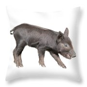 Wild Black Piglet Throw Pillow