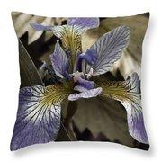 Wild Blue Iris Throw Pillow