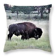 Wild Buffalo Throw Pillow
