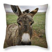 Wild Burro Throw Pillow