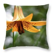 Wild Canadian Lily Throw Pillow