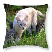 Wild Cats In Hialeah Throw Pillow