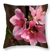 Wild Cherry Blossom Throw Pillow