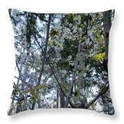Wild Cherry Tree Blossoms On Verona Throw Pillow