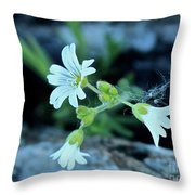 Wild Chickweed Throw Pillow