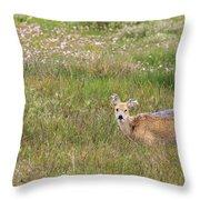 Wild Chinese Water Deer  Throw Pillow