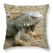 Wild Colorful Iguanas In The Outdoors With Spines On His Back Throw Pillow