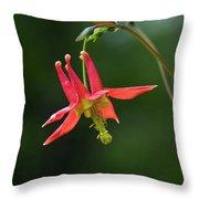 Wild Columbine Wildflower Throw Pillow