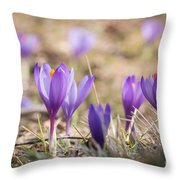 Wild Crocus Balkan Endemic Throw Pillow